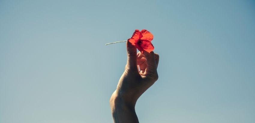 手に赤い花