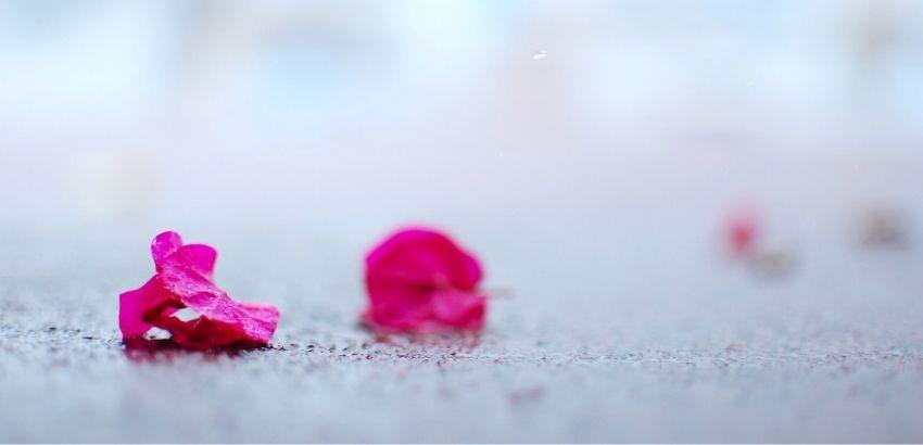 雨に濡れた花びら
