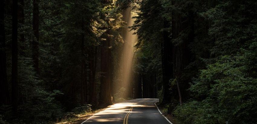 光の筋の道